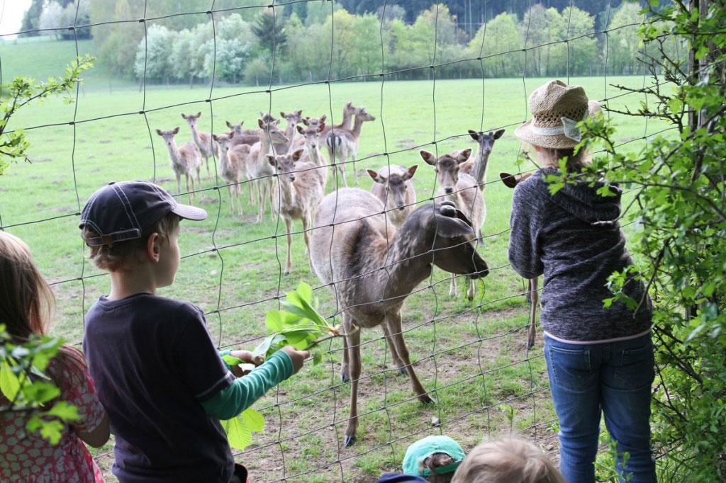 Reh Gehege Wild Regional Natur